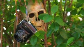 Alter Kameraschädel-Baumhintergrund niemand hd Gesamtlänge stock video footage