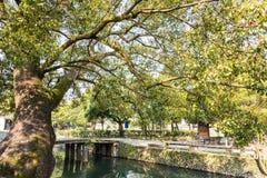 Alter Kampferbaum und Lishui-alte Steinbrücke Stockfoto