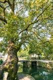 Alter Kampferbaum und Lishui-alte Steinbrücke Lizenzfreie Stockfotos
