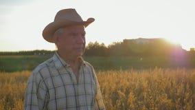 Alter kaukasischer Mannlandwirt in einem Cowboyhutweg auf einem Gebiet des Weizens bei Sonnenuntergang stock footage