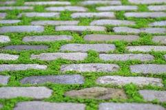 Alter Kopfsteinweg mit etwas grünem Gras Lizenzfreie Stockfotos
