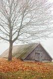 Alter ländlicher Keller unter kahlem Baum stockbild