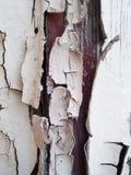 Alter Lack auf Wand Lizenzfreie Stockfotografie
