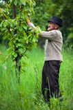 Alter Landwirt in seinem Obstgarten lizenzfreie stockfotos