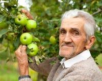 Alter Landwirt und Apfelbaum Stockbilder