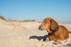 Alter lustiger Hund, schläft süß auf dem Strand Lizenzfreie Stockfotografie