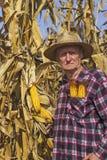 Alter Mann auf dem Maisgebiet Stockbilder