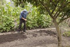 Alter Mann, der im Gemüsegarten arbeitet Lizenzfreie Stockfotos