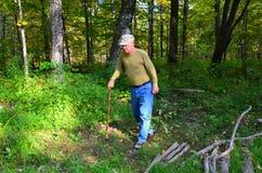 Alter Mann, der in Wald geht Lizenzfreie Stockbilder