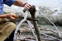 Alter Mann schneidet mit Niederlassungen einer Säge eines Baums für den Winter stockbild