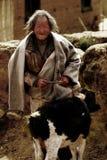 Alter Mann und Schafe in Tibet Lizenzfreie Stockfotos