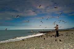 Alter Mann zieht die Tauben und die Möven ein Stockbild