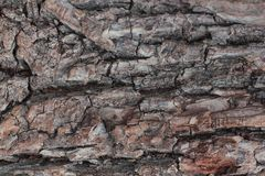 Alter natürlicher hölzerner schäbiger Hintergrundabschluß oben, alter hölzerner Hintergrund, Beschaffenheit des hölzernen Gebrauc Lizenzfreie Stockfotografie