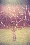 Alter Obstbaum im surrealen Licht Lizenzfreies Stockfoto