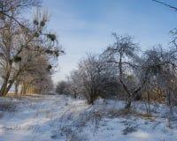 Alter Obstgarten, Bäume bedeckt mit Schnee Lizenzfreie Stockbilder