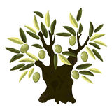Alter Olivenbaum Lizenzfreie Stockfotos