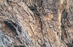 Alter olivgrüner Baumrindehintergrund Lizenzfreies Stockbild