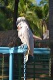 Alter Papagei stockbild