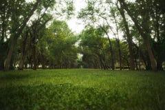 Alter Park mit großen Bäumen und dem Himmel Stockbilder