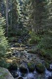 Alter Park Tsarska oder königliches Bistritsa mit terassenförmig angelegtem Fluss und anders als Bäumen im ehrwürdigen herbstlich stockfotografie
