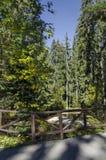 Alter Park Tsarska oder königliches Bistritsa mit terassenförmig angelegtem Fluss und anders als Bäumen im ehrwürdigen herbstlich lizenzfreie stockfotografie