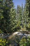 Alter Park Tsarska oder königliches Bistritsa mit terassenförmig angelegtem Fluss und anders als Bäumen im ehrwürdigen herbstlich lizenzfreie stockfotos