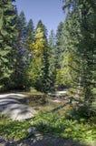 Alter Park Tsarska oder königliches Bistritsa mit terassenförmig angelegtem Fluss und anders als Bäumen im ehrwürdigen herbstlich lizenzfreies stockbild