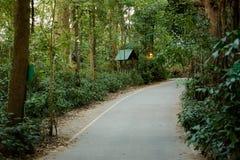 Alter Park um Wat Udong lizenzfreies stockfoto