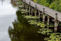 alter Plankenpier mit grüner Seerose lässt das Schwimmen auf dem wate Stockbilder