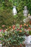 Alter Platz mit Rosen Stockbild