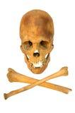 Alter prähistorischer menschlicher Schädel getrennt stockfotos