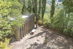 Alter ruinierter bulding innerer Wald Stockbilder