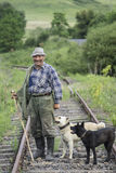 Alter Schäfer und Hunde Stockfotos