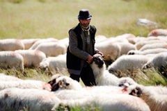 Alter Schäferhund Lizenzfreie Stockfotografie