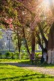 Alter Stadtpark mit Laterne Stockfotografie