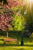 Alter Stadtpark mit Laterne im Sonnenlicht Stockbilder