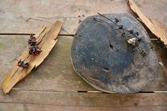 Alter Stamm mit trockener Barke auf hölzernem Hintergrund Lizenzfreie Stockbilder