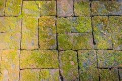 Alter Steinboden überwältigt mit grünem Moos Backsteinmauer mit dem Gras- und Mooswachstum, das schönes strukturiertes auf der Ob Lizenzfreie Stockfotos