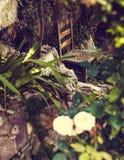 Alter Stuhl im geheimen Garten in Athen lizenzfreies stockbild
