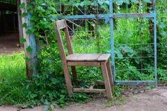 alter Stuhl und blaues Metalltor mit Kletterpflanzen Stockfoto