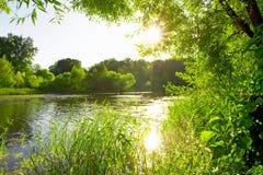 Alter Teich im Wald Stockfotografie