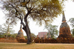 Alter Tempel des Parks in Ayutthaya, Thailand Stockfotos