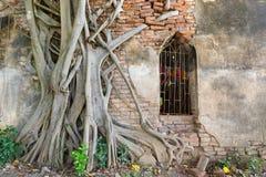 Alter Tempel in Thailand stockfotos