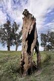Alter toter Baum Lizenzfreies Stockfoto