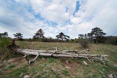 Alter toter Baum auf der Wiese Lizenzfreie Stockbilder