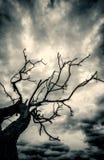 Alter toter Baum und stürmischer Himmel Stockfoto