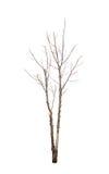 Alter und toter Baum Stockfoto