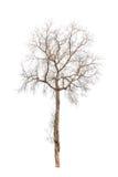 Alter und toter Baum Lizenzfreie Stockfotografie