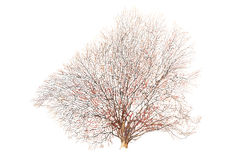 Alter und toter Baum lokalisiert Stockbilder