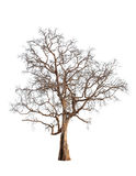 Alter und toter Baum Stockbild